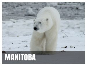 Manitoba Destination