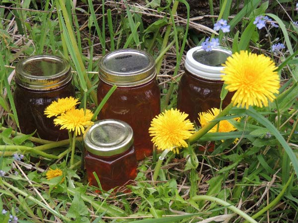 Work and travel making Dandelion honey from wildflowers