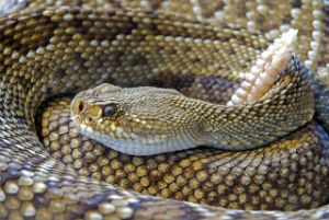Poisonous Snakes in the wilderness