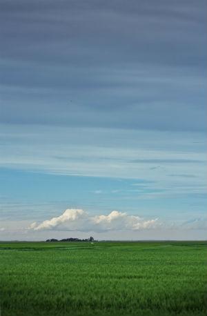 Saskatchewan - Field