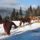Majestic Horses Herd