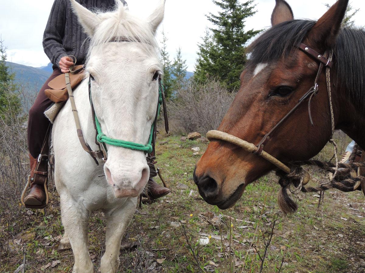 Smokey And Diamond Horses