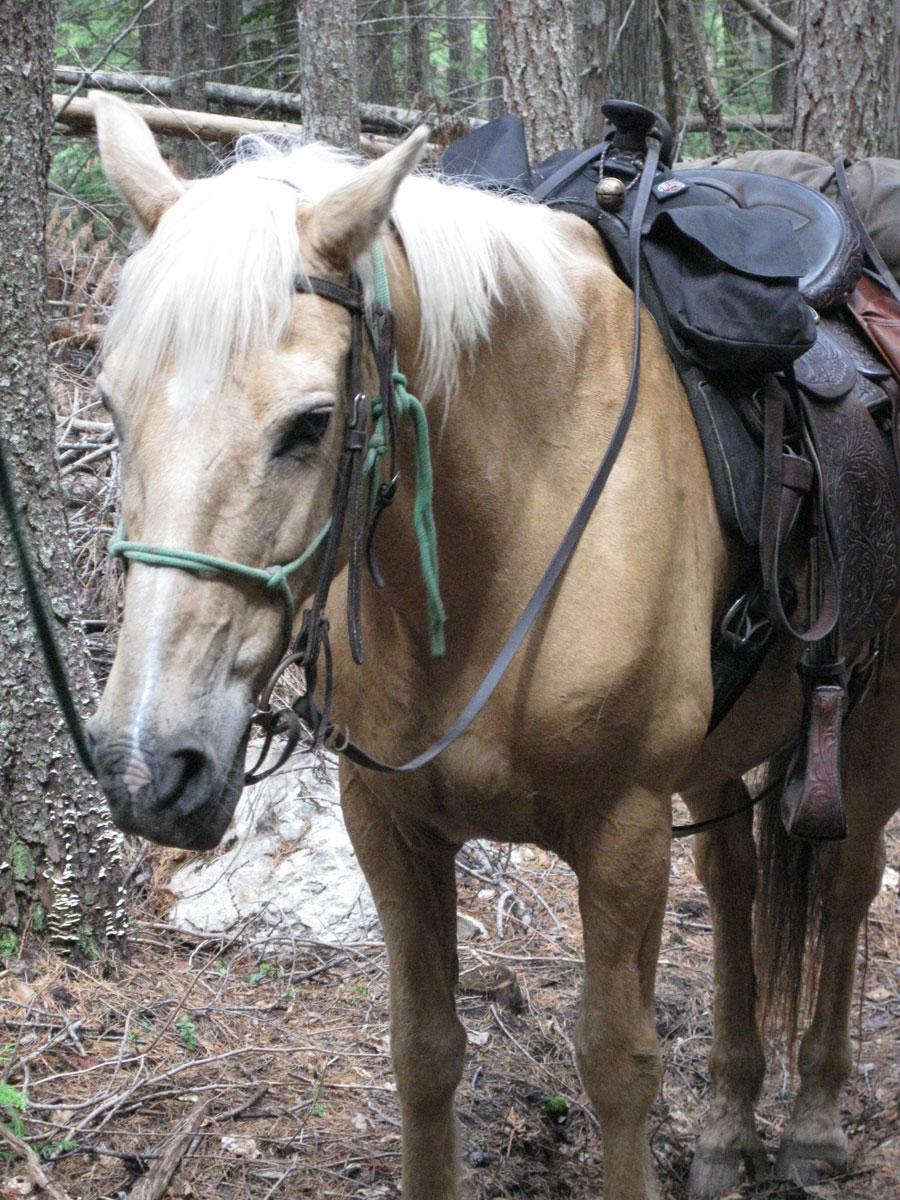 Majestic Horse Vicky