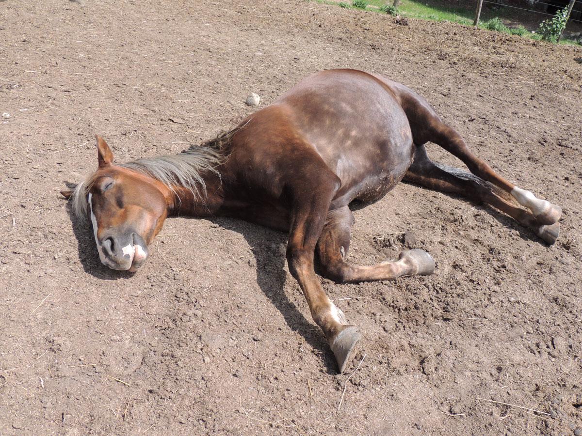 Happy Sleeping Horse