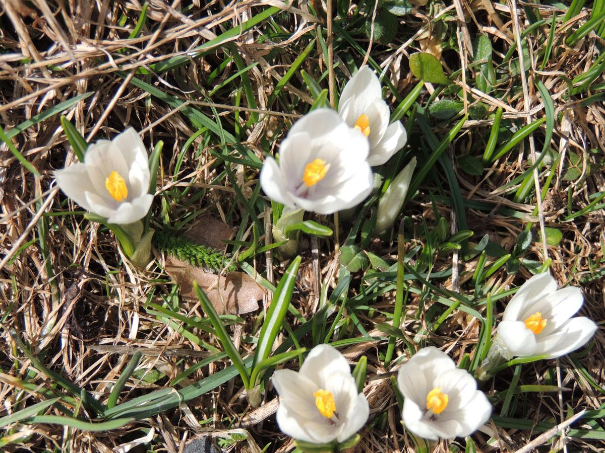 Canada wildflowers