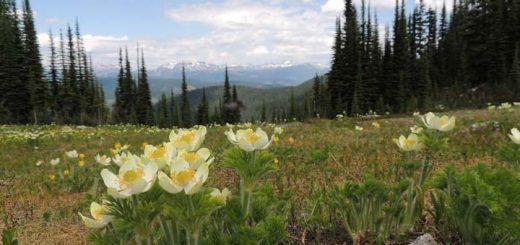 Twin Lake North Okanagan Hikes - mountain view