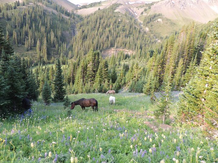 Horse Pack Trip - grazing horses