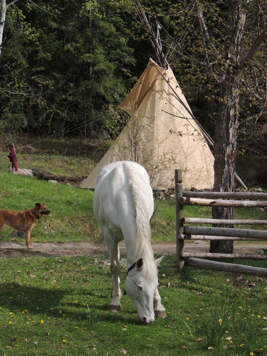 Smoky in front of Tipi